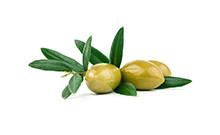 botanical_Olive