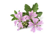 ingredient_Mallow-MalvaSylvestris-FlowerExtract