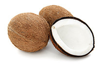 botanical_Coconut