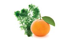 botanical_VitaminC_AglaeExtract