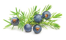 botanical_Juniper_Berry_Fruit_Oil