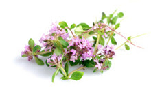 ingredient_Thyme-ThymusVulgaris-Extract