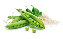 botanical_Pea_Rice