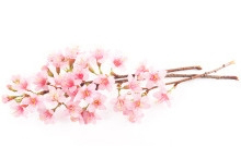RE9Brightening_CollectionPage_CherryBlossom_Image