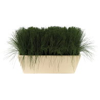 Preserved Treescapes International Mondo Grass