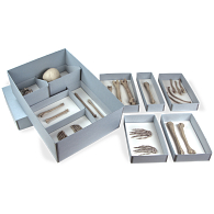 Gaylord® Skeletal Remains Storage Kit