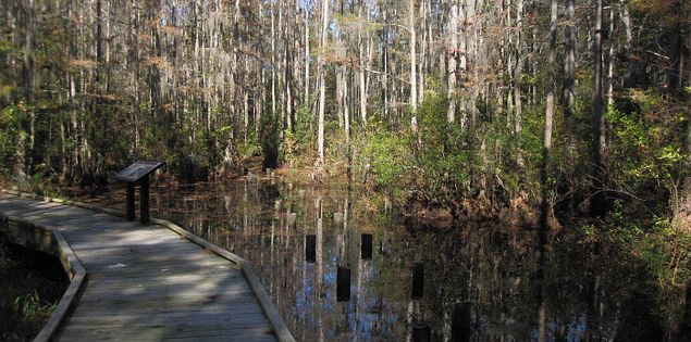 Explore Carolina Bay, a unique South Carolina feature at Woods Bay State Park