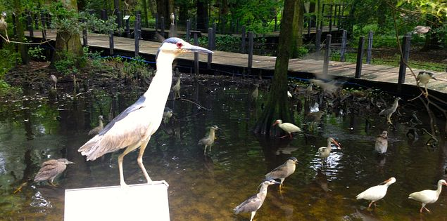 Lowcountry Zoo in Brookgreen Garden