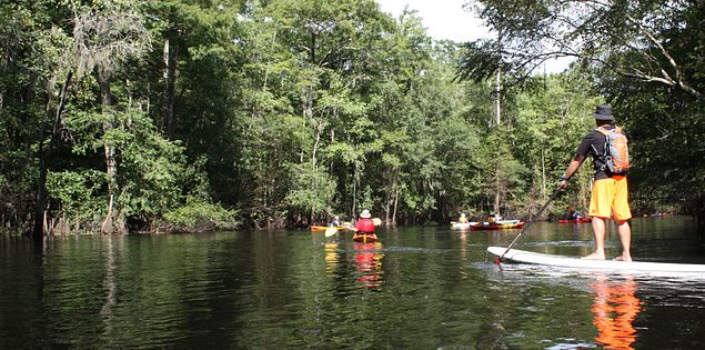 paddle board on Little Pee Dee River
