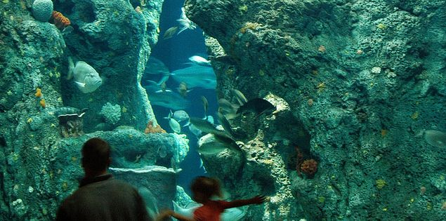 The South Carolina Aquarium in Charleston, SC, is a popular family-friendly attraction in the Lowcountry.