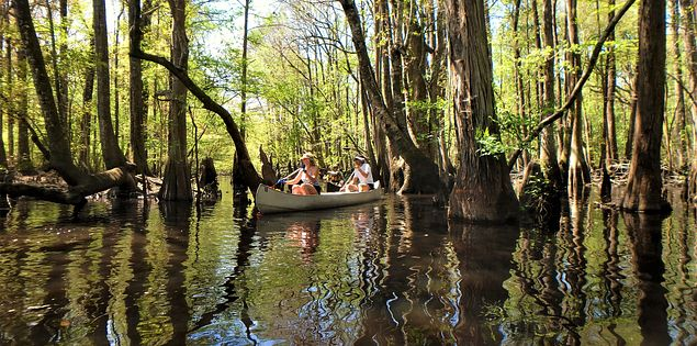 edisto river boaters trees