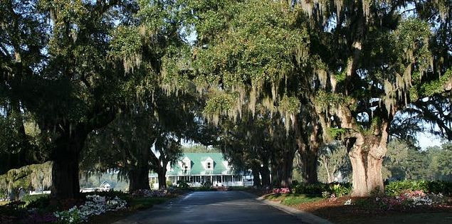 Live oaks draped in Spanish Moss are a signature Lowcountry look.