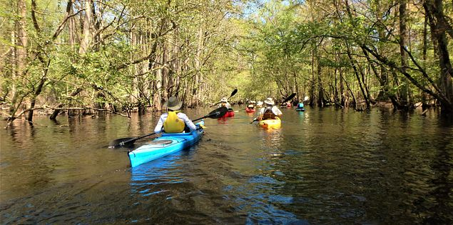Edisto river bamber county kayak