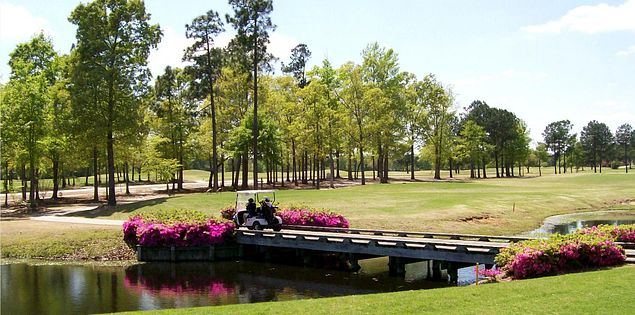 Azaleas at Wyboo Golf Club in Manning, SC.