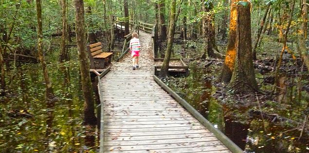 Hiking in Congaree National Park outside of Columbia