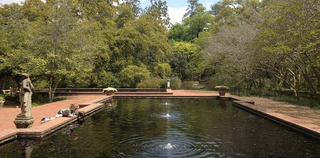 Visit gardens in South Carolina.