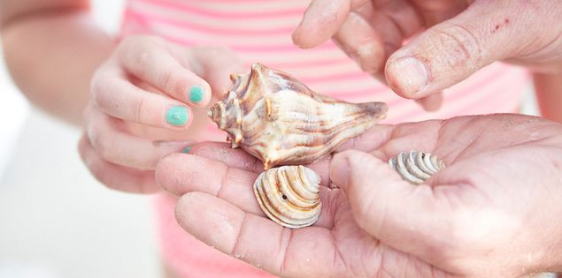 Collect shells on beaches in South Carolina.