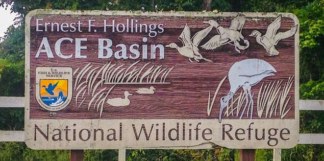 South Carolina's Ernest F. Hollings Ace Basin National Wildlife Refuge