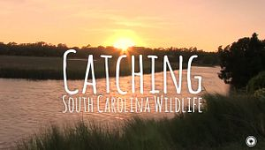 Crabbing, Seining and Pier Fishing in South Carolina