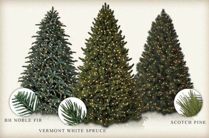 Traditional vs. Realistic Christmas Tree   Balsam Hill