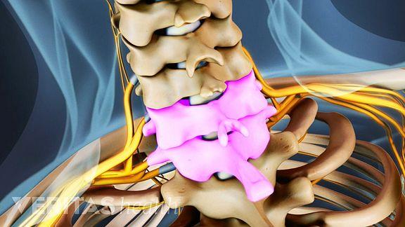C6-C7 spinal segments