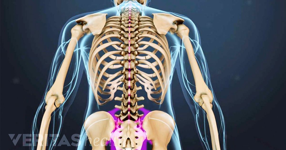 Spine anatomy articles and videos on the spinal column