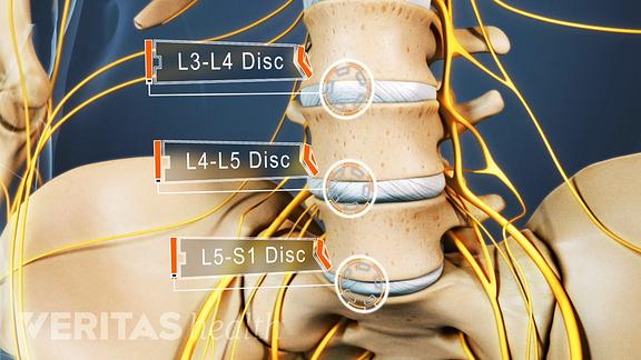 vertebrae and discs