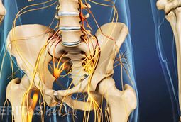 The cauda equina is a bundle of nerve fibers at the bottom of the spinal cord.