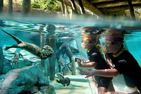 Kids snorkelling and watching otters underwater at Discovery Cove.