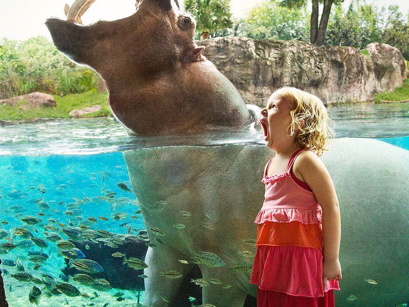 Busch Gardens Tampa Bay Theme Parks in Orlando Florida