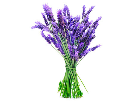 ARB_CollectionPage_EssentialOils_Botanical-Lavender