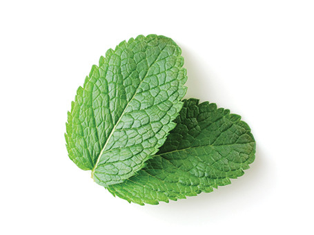 ARB_CollectionPage_EssentialOils_Botanical-Peppermint