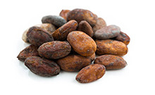 botanical_cocoaseed