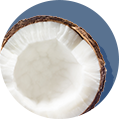 Coconut_Icon