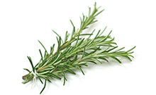 botanical_Rosemary_Leaf_Oil