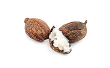 botanical_Shea_Butter_Nuts