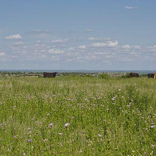 Burnett Ranches, LLC