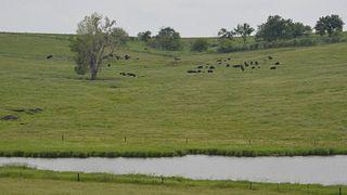 Nichols Farms LTD