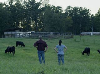 MBK Cattle Hero