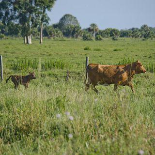 Bull Hammock Ranch