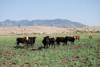 Babocomari Ranch