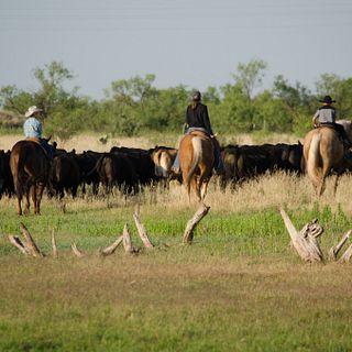 2017 ESAP Winner - Region IV - Sterling Cattle Company