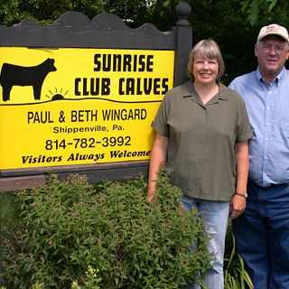 Sunrise Club Calves