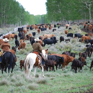 T-N Ranch
