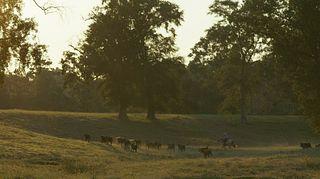 Bluff Creek Cattle