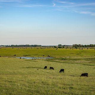 Black Leg Ranch