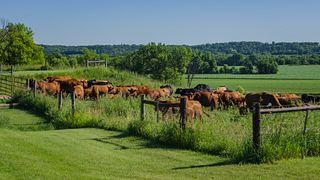Stoney Creek Farm