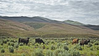 Maggie Creek Ranch
