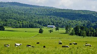 Mountain Meadows Farm