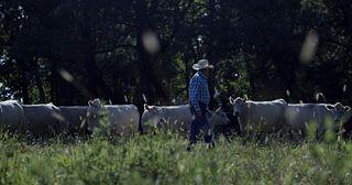 BQA - Cow Calf